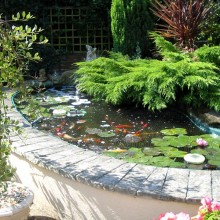 Ornamental fish pond