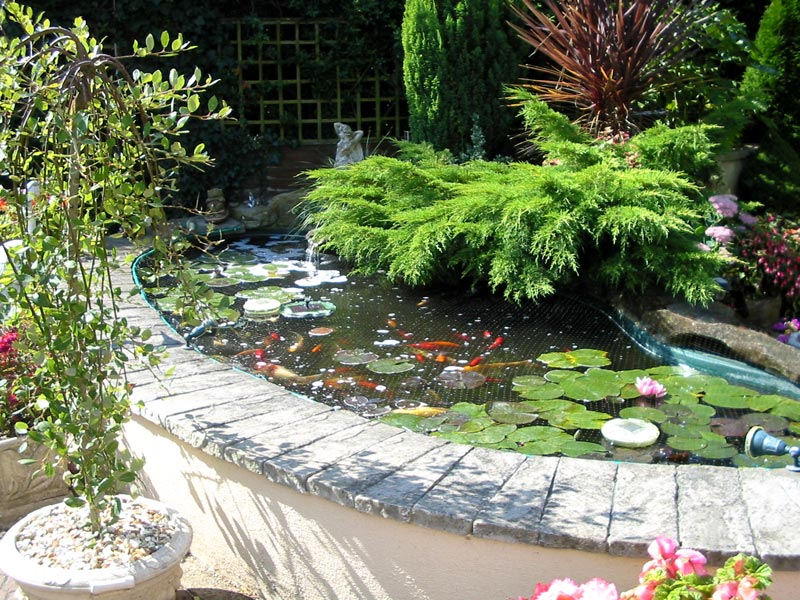 Water features created by shakespeare s landscapes for Ornamental pond fish uk