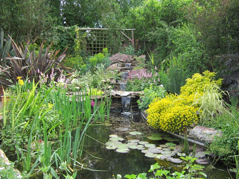 Water features created by shakespeare s landscapes for Planting around a pond suggestions